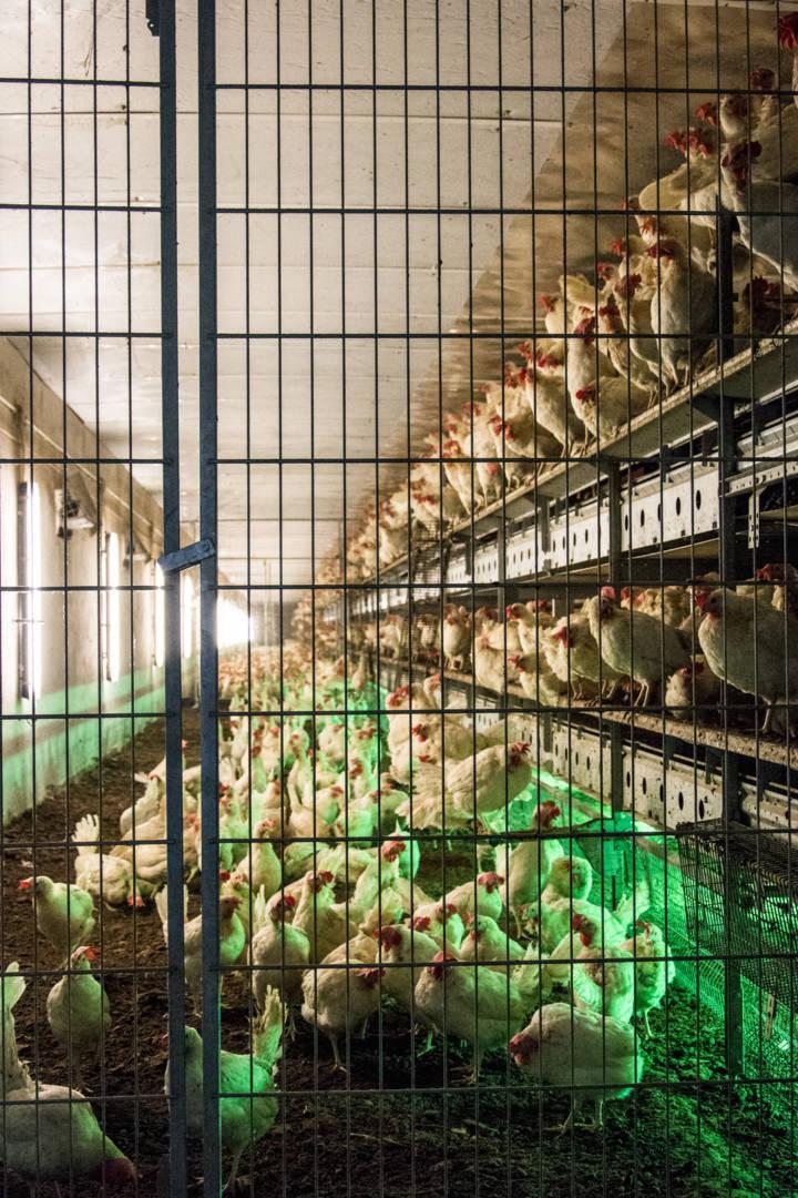 Płyty warstwowe w budownictwie rolniczym